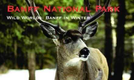 Wild Worlds: Banff, Alberta in Winter