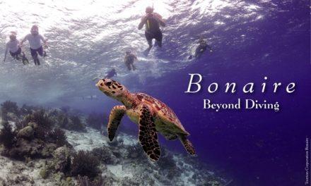 Bonaire – Beyond Diving