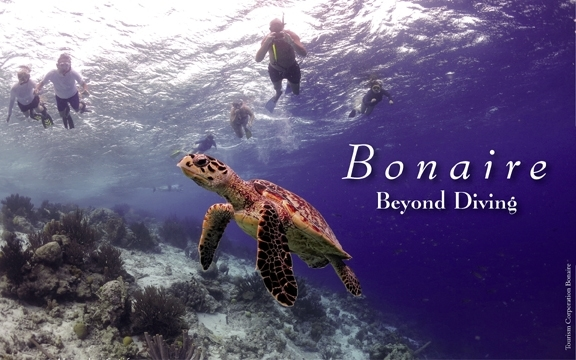 Bonaire – Beyond Diving