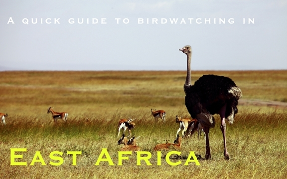 A quick guide to birdwatching in East Africa