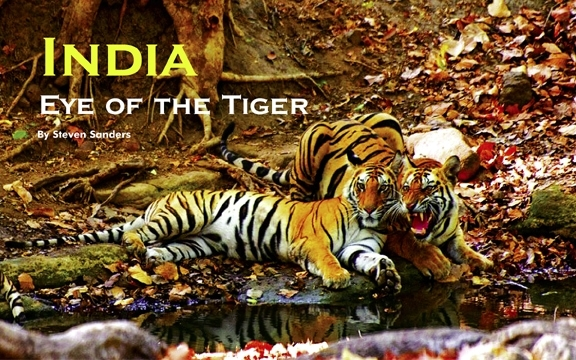 India – Eye of the Tiger