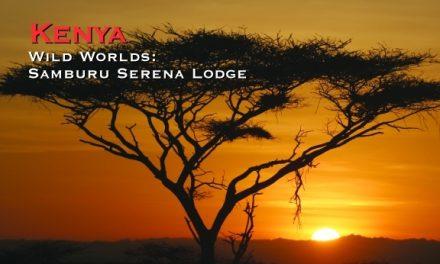 Kenya – Wild Worlds: Samburu Serena Lodge