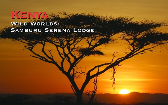 Kenya – Wild Worlds: Samburu Serena Lodge