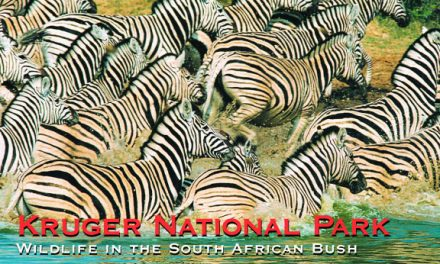 Kruger National Park – Wildlife in the South African Bush