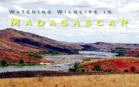 Watching Wildlife in Madagascar
