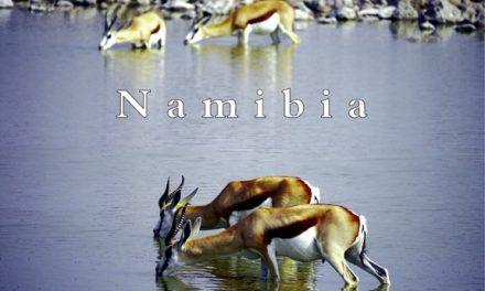 Namibia – Predator or prey