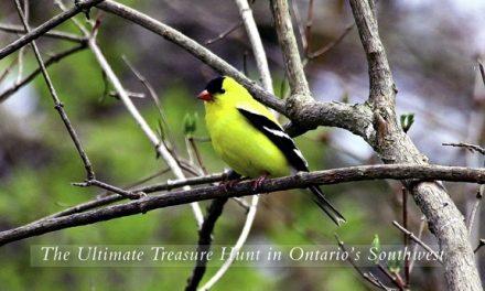 The Ultimate Treasure Hunt in Ontario's Southwest