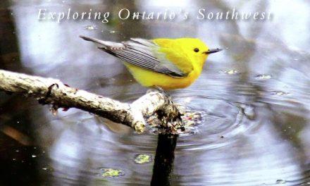 Exploring Ontario's Southwest