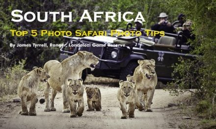 South Africa – Top 5 Photo Safari Photo Tips