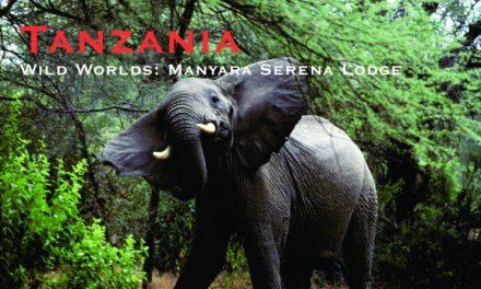 Tanzania – Wild Worlds: Manyara Serena Lodge
