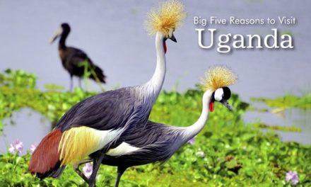 Uganda – Big Five Reasons to Visit Uganda