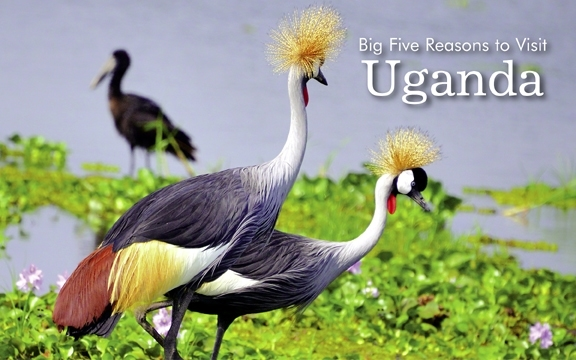 Uganda – Big Five Reasons to Visit Uganda