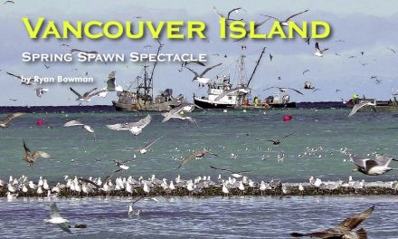 Vancouver Island – Spring Spawn Spectacle