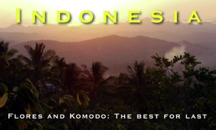 Indonesia – Flores and Komodo: The best for last