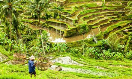 The Heart of Bali: Ubud