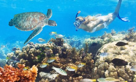 World Class Diving in the Philippines