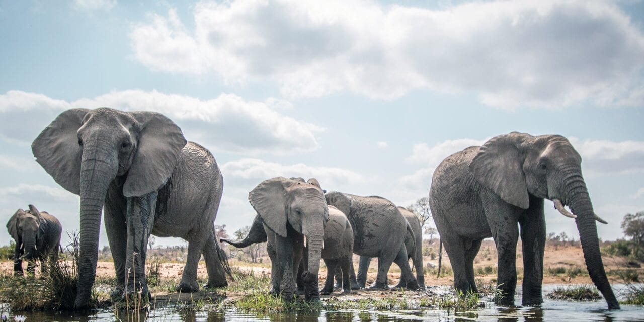 Kruger National Park: A Journey into the Wild