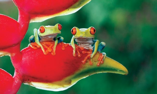 Costa Rica Wildlife Vacation